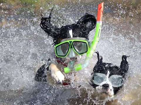 Dog's Swimmers